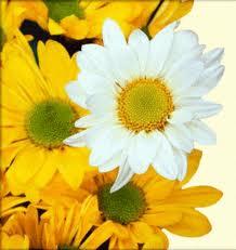 gul blóm